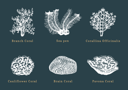 Vector illustrations of corals. Collection of drawn sea polyps on dark background.
