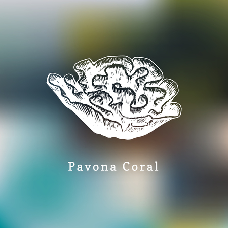 Pavona coral vector illustration. Drawing of sea polyp on blurred background.