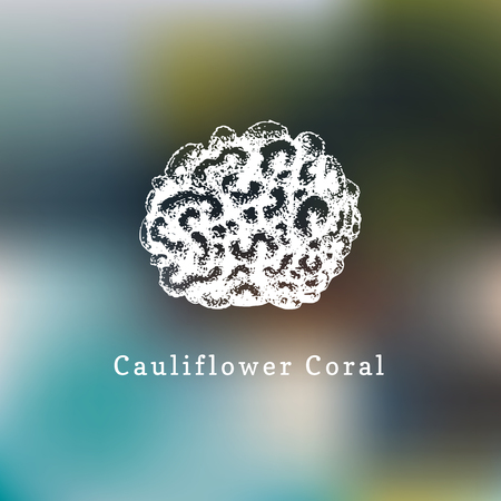 Cauliflower coral vector illustration. Drawing of sea polyp on blurred background.