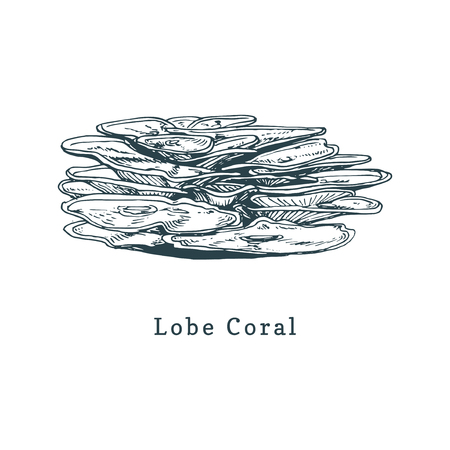 Lobe coral vector illustration. Drawing of sea polyp on white background. Ilustração