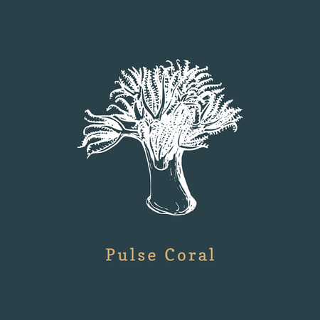 Pulse coral vector illustration. Drawing of sea polyp on dark background