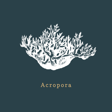 Acropora coral vector illustration. Drawing of sea polyp on dark background