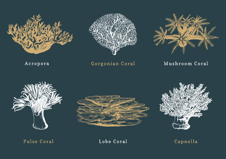 Vector illustrations of corals. Collection of drawn sea polyps on dark background Illustration