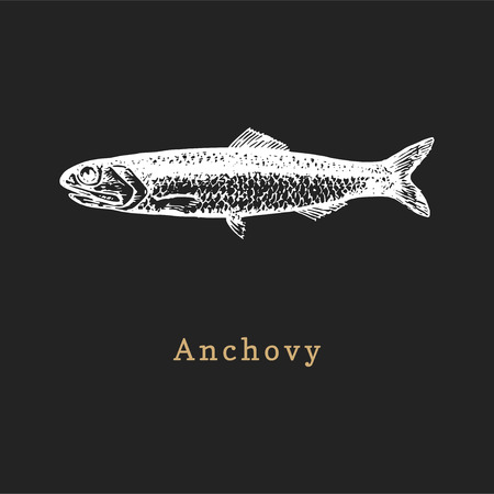 Illustration of anchovy on black background. Fish sketch in vector. Drawn seafood in engraving style. Used for canning jar sticker, shop label etc. Illustration