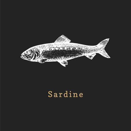 Illustration of sardine on black background. Fish sketch in vector. Drawn seafood in engraving style. Used for canning jar sticker, shop label etc.