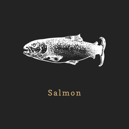 Illustration of salmon on black background. Fish sketch in vector. Drawn seafood in engraving style. Used for canning jar sticker, shop label etc.