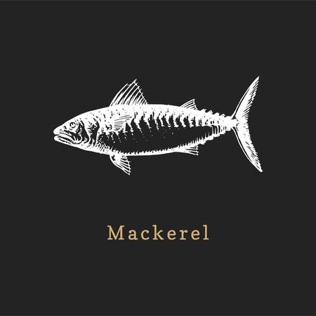 Illustration de maquereau sur fond noir. Croquis de poisson en vecteur. Fruits de mer dessinés dans un style de gravure. Utilisé pour l'autocollant de pot de conserve, l'étiquette de magasin, etc. Vecteurs