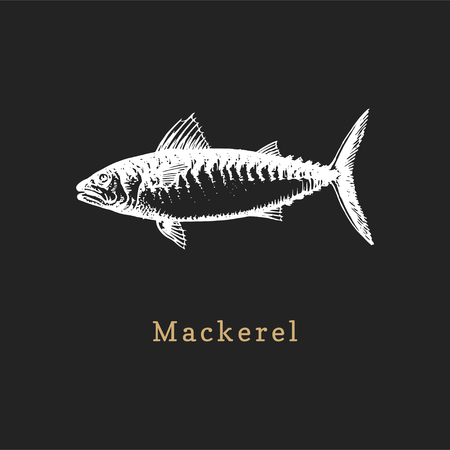 Illustration of mackerel on black background. Fish sketch in vector. Drawn seafood in engraving style. Used for canning jar sticker, shop label etc. Ilustrace