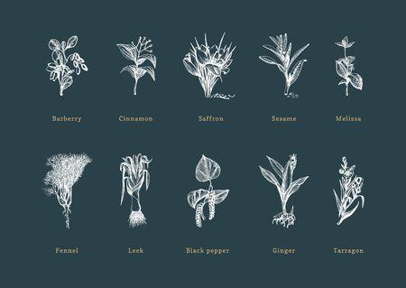 Drawn spice herbs set in engraving style. Illusztráció