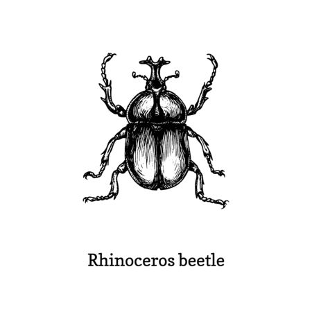 Illustration of Rhinoceros beetle. 向量圖像