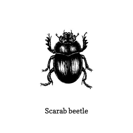 Illustration of Scarab beetle. Drawn insect in engraving style. Foto de archivo - 128796416
