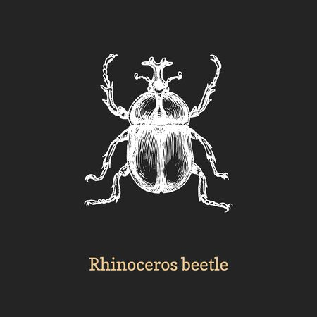 Illustration of Rhinoceros beetle. Drawn insect in engraving style. Illustration
