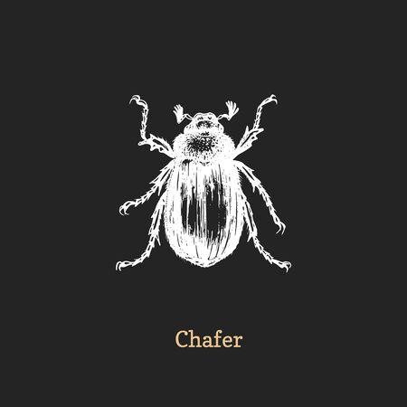 Illustration of Chafer beetle. Drawn insect in engraving style. Foto de archivo - 128796430