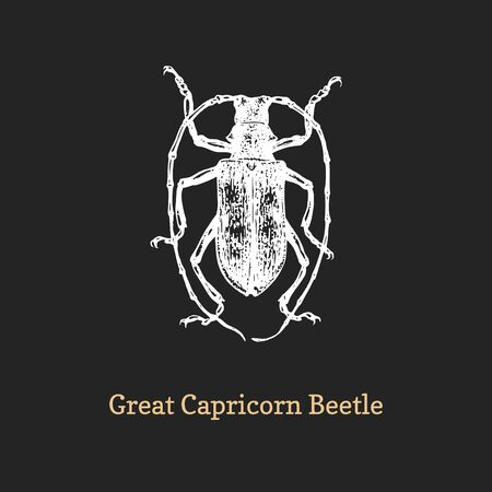 Illustration of Great Capricorn beetle. Drawn insect in engraving style.