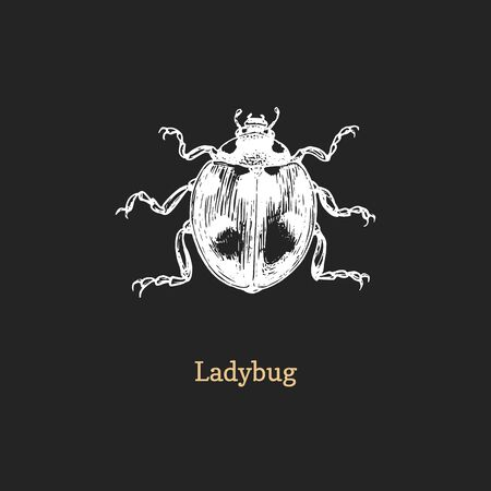 Illustration of Ladybug. Drawn insect in engraving style. Ilustrace