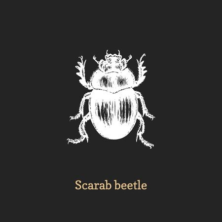 Illustration of Scarab beetle. Drawn insect in engraving style.