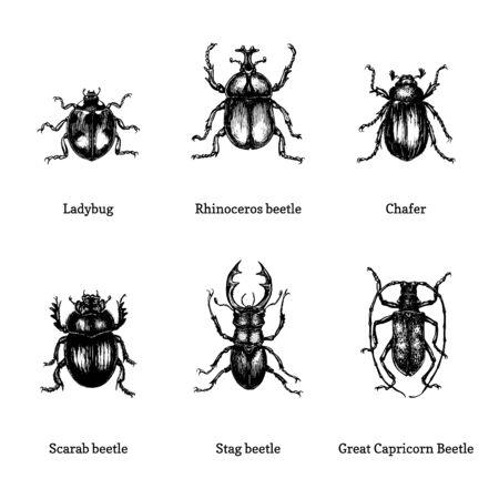 Illustration of beetles on white Foto de archivo - 128796436