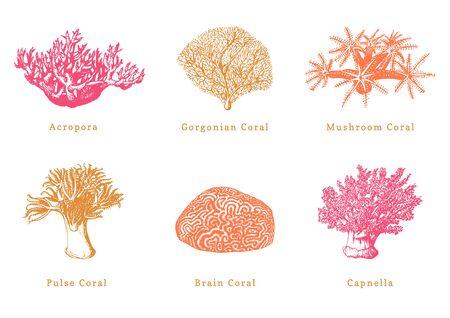 Collection of drawn sea polyps on white