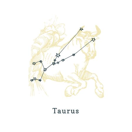 Zodiacal constellation of Taurus of drawn symbol in engraving style. Ilustrace