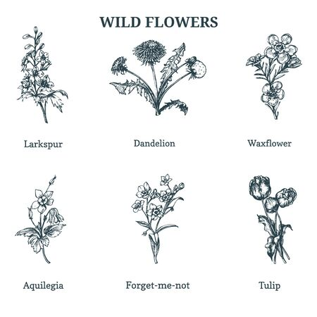 Wild flowers Hand drawn sketches set in engraving style.