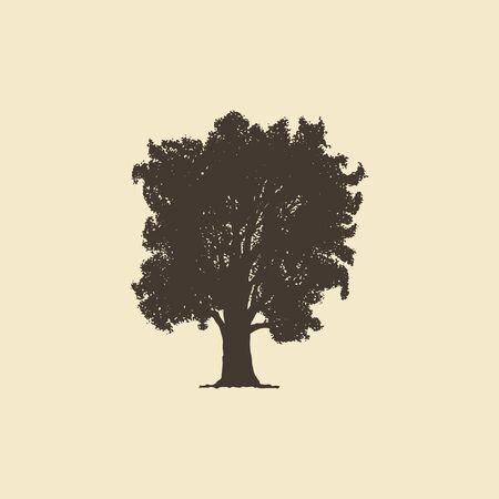 Oak, hand drawn silhouette. Vector sketch of deciduous tree.