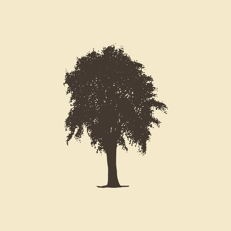 Elm or Maple, hand drawn silhouette. Vector sketch of deciduous tree.
