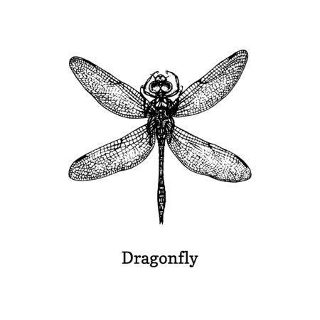 Illustrazione vettoriale di libellula. Schizzo disegnato a mano di insetto in stile vintage.