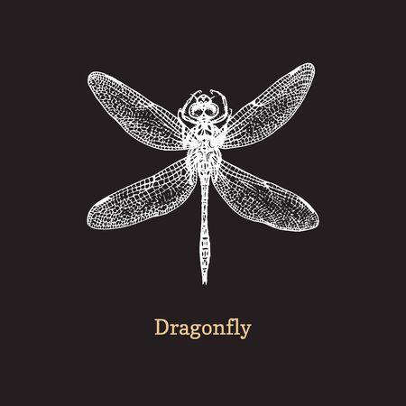 Dragonfly vector illustration on black