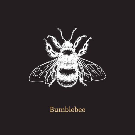 Bumblebee vector illustration on black Ilustrace