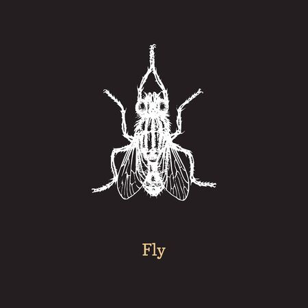 Fly vector illustration on black