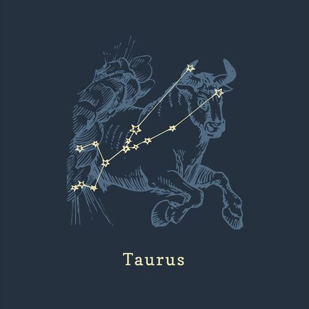 Zodiac constellation of Taurus in engraving style. Vector retro graphic illustration of astrological sign Bull. Ilustrace