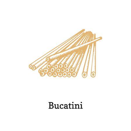 Bucatini, vector illustration in vector.