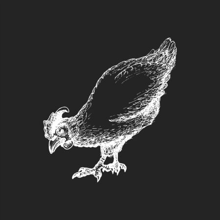 Hand drawn hen in engraving style. Graphic illustration of chicken in vector. Stock Illustratie