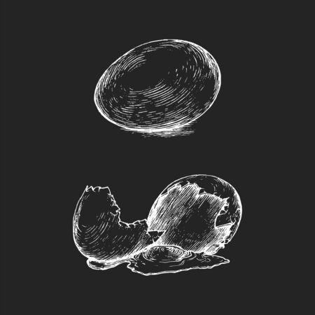 Hand drawn broken egg in vector. Graphic illustration in engraving style. Stock Illustratie