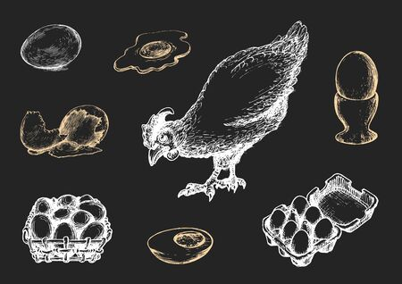 Graphic illustrations of poultry farm goods in vector. Hand drawn set of hennery production in engraving style. Ilustrace