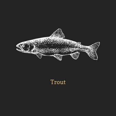 Trout illustration. Fish graphic sketch in vector. Illustration