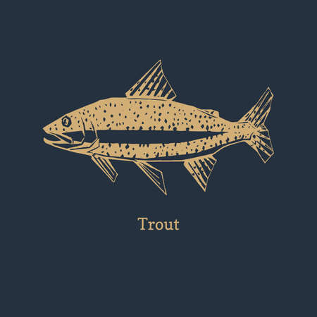 Trout illustration in vector.