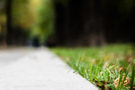 Sottragga il marciapiede della sfuocatura con gli alberi e l'erba nel parco della città. Vista dal livello del suolo