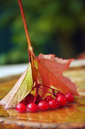 Berries of a mountain ash in water Stock Photo