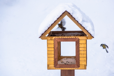 Birdhouse in winter forest with two birds