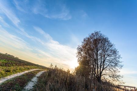 Sunset landscape on long summer country road Standard-Bild