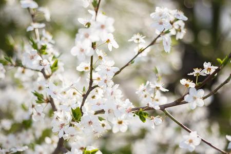 hojas de arbol: jard�n de flores de primavera rama de �rbol Foto de archivo