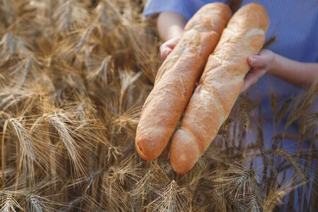 Two Crusty french baguettes in womens hands over ripening ears of yellow wheat field, top view. Stockfoto