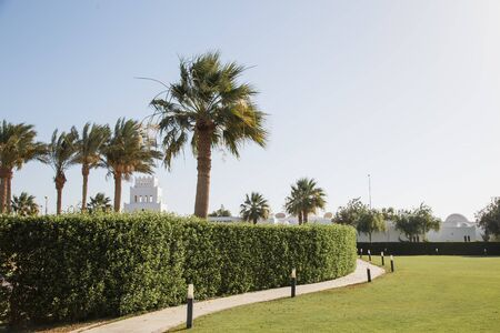 Green yard with palms in Egypt.