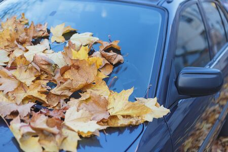 Car filled up by autumn leaves