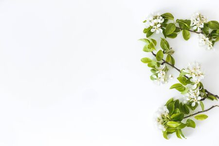 Blooming spring pear branches on a white background, floral frame, top view, flat layout. Spring concept.