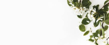 Spring composition. Blooming spring pear branches on a white background, floral frame, top view, flat layout. Spring concept Reklamní fotografie