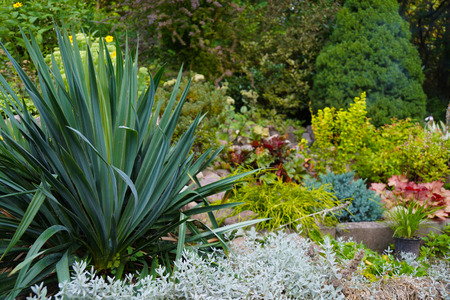 An attractive arrangement of plants in the garden