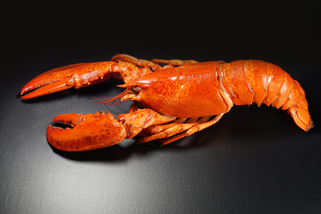 The whole silhouette of cooked lobster prepared for further processing in order to prepare an extremely tasty dish.