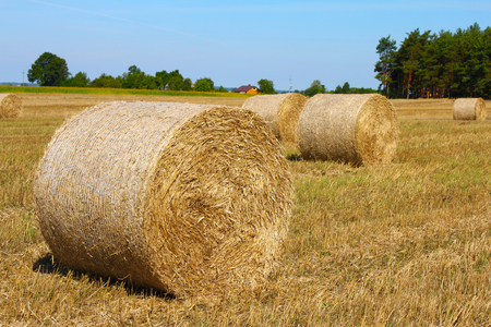 Agricultural landscape, bales of straw, in the background village buildings and forest